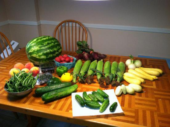 Full summer veggie share. WOW!