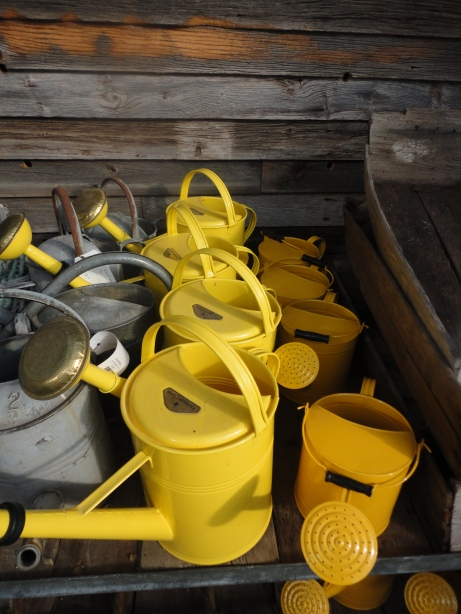 Happy, yellow watering cans