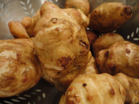 Jerusalem artichokes - not the prettiest girl at the party but she makes up more it in practicality and common sense