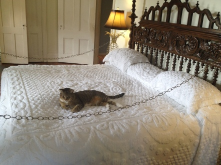 Hemingway's king-sized bed, complete with kitten taking a snooze