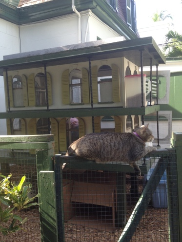 A replica of the main house for the cats with a fat cat lounging out front