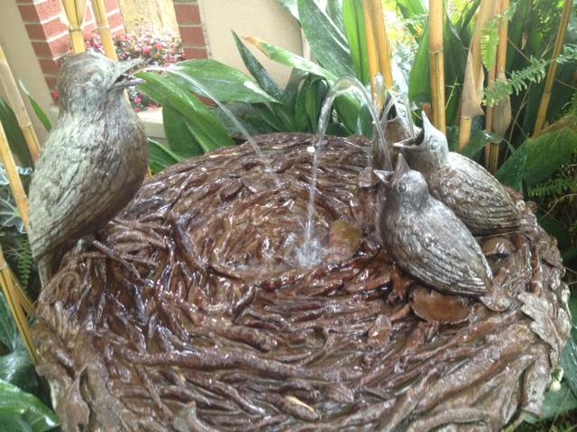 Longwood birds