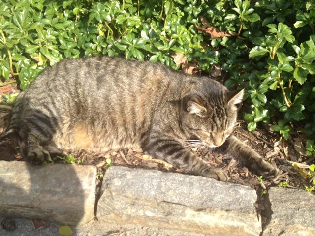 Longwood cat