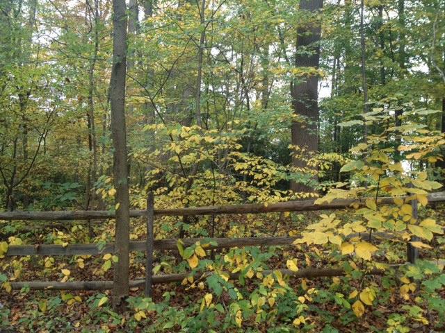 Longwood fence
