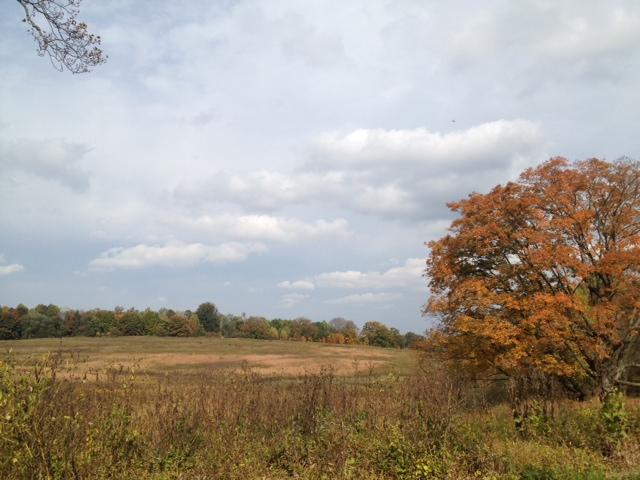 Longwood meadow 2